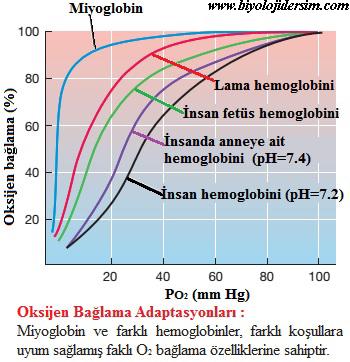 pigmentlerin oksijen bağlama kapasiteleri