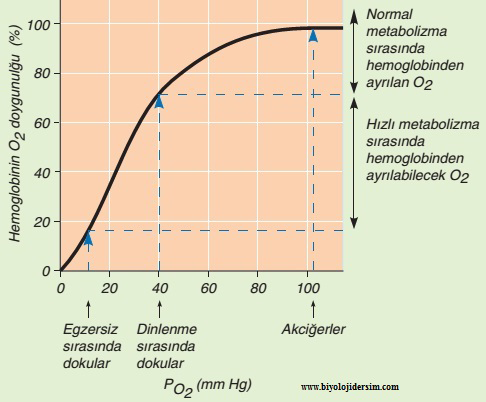 oksijenin kısmi basıncı