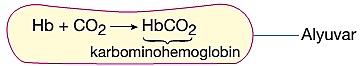 karbondioksit doku kılcallarında taşınması